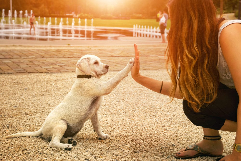 Dog hifives woman